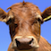 Cows Jigsaw Icon