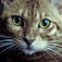 iSpyCats Icon