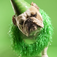 Party Dog Slide Puzzle Icon
