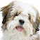 SlidePuzzle – Lhasa Apso Icon