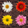 Zen Flowers Icon