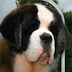 Dog Breeder HD Icon