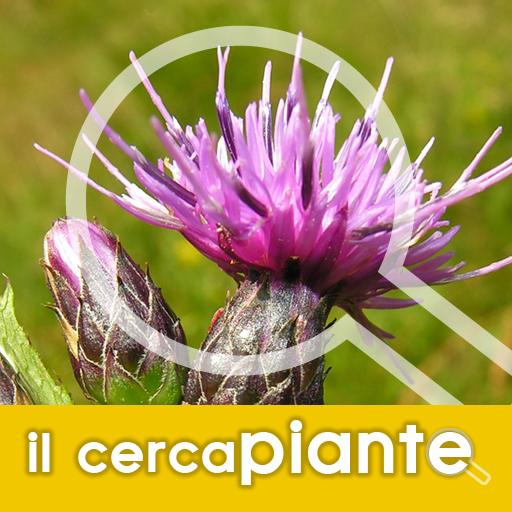 Il Cercapiante - Immagini, nomi scientifici, comuni e dialettali di piante