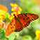 How to Attract Butterflies to Your Garden! Icon