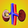 Kidney Diseases Icon