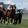 Horse Racing Live (iHorseRacing)