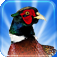 Pheasant Hunt 3D Icon