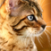 Cat Species Pocket Book Icon