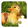 Puzzle Baby Animals Icon