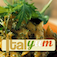 Italian Recipes Italyum.com Lite Icon