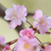 Sakura Photobook Vol.001 -Japanese cherry blossom Photo Collection- Icon