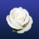 vFlowers Icon