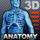 Human Body 3D Anatomy Icon