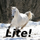Horse Wallpaper Lite Icon
