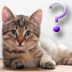 Cat Breed Quiz for iPad Icon