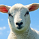 SlidePuzzle – Lamb Icon