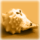 Beach Shell Icon