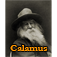 Calamus by Walt Whitman Icon