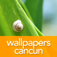 WP Cancun 1 Icon