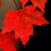 WallPix HD-Autumn Leaves Icon