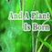 THE MIRACLE OF CREATION IN PLANTS Icon