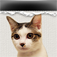 Calennya : Cat page-a-day calendar Icon