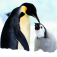 Penguins Calendar Icon
