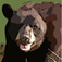 Bear 's -Animals of the Woods and Forests Icon