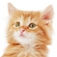 SlidePuzzle – Baby Kitten Icon