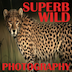 Superb Wild Photography Icon