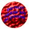Do Not Push My Buttons Icon