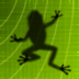 Ancient Frog HD Icon