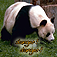 Danger Danger! A fun memory game with endangered animals. Icon