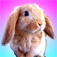 Talking Bunny for iPhone Icon