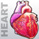 Heart Medical Encyclopedia Icon