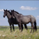 BEAUTIFUL HORSES Vol 2 – Collection of Horse Breeds