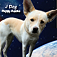 J Dog Jump – Rescue Puppies Icon