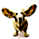 DoggeeTalk Icon