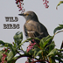 "Wild Birds ""iPad Version"" Icon"